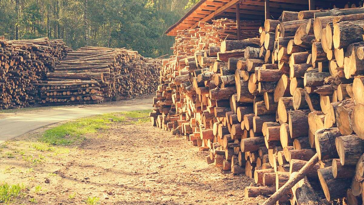 Sawmill Owners & Manufacturers - Timbeter